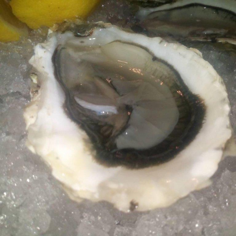 frutto di mare