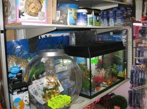 Fish pets equipment and food at angel aquarium didcot for Fish and more pet store