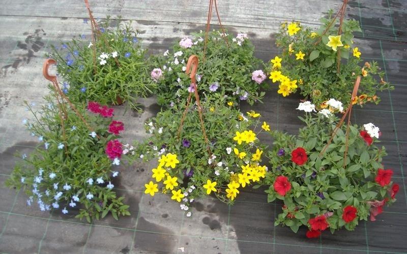vivaio piante brindisi