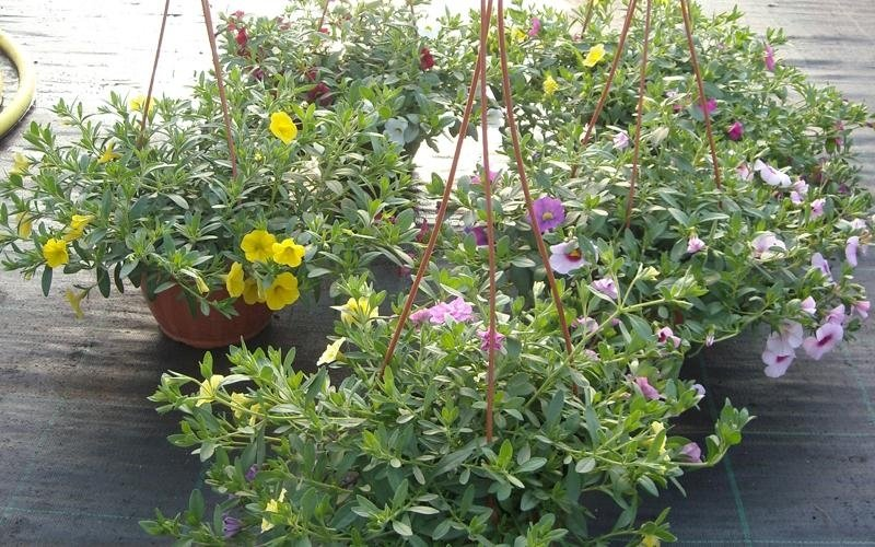 piante in vaso oria