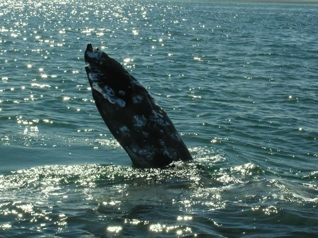 WhaleWatchingSlideshow