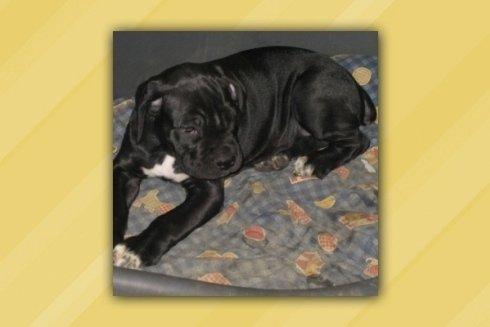 cucciolo nero La Spezia