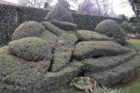 Giardino con cespugli