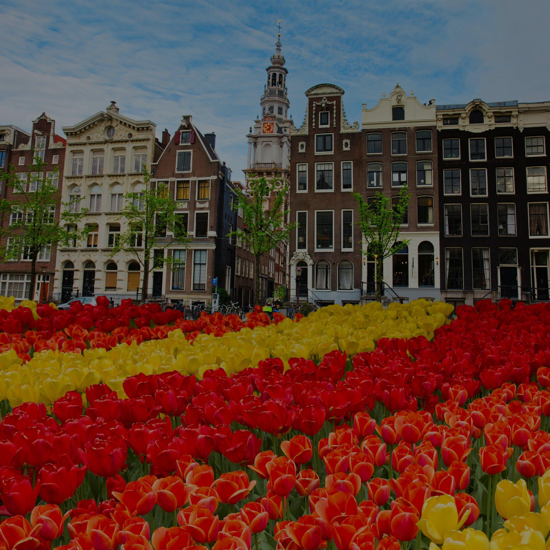 Gruppereiser til Amsterdam