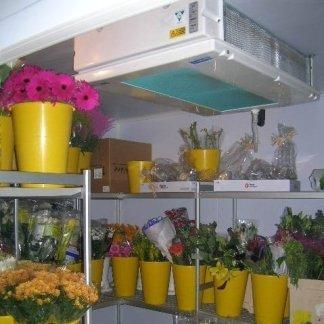 celle frigo fiori