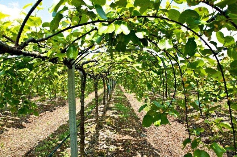 impianti ed irrigazione