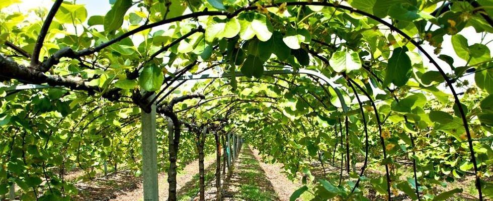 Impianti di irrigazione per frutteti