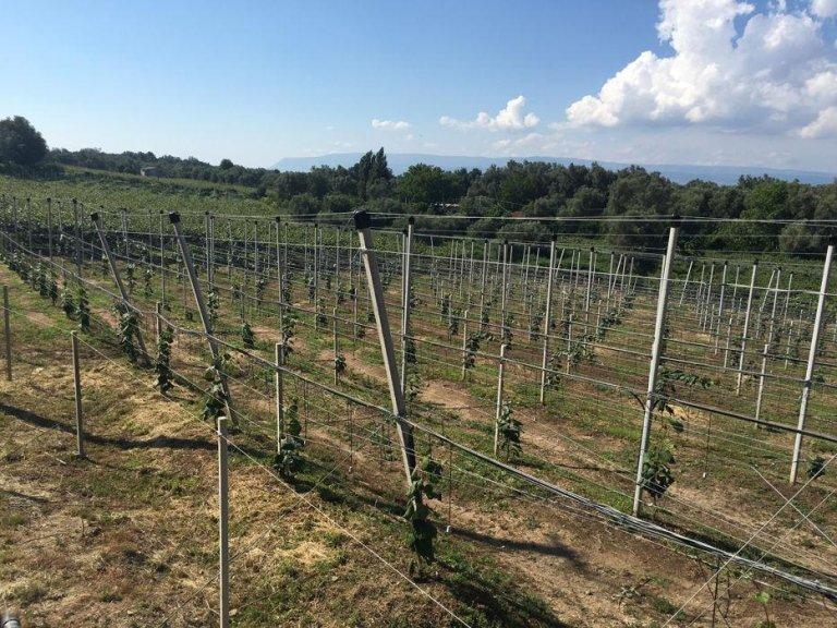 impianti di irrigazione e per frutteti
