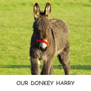 Harry the donkey