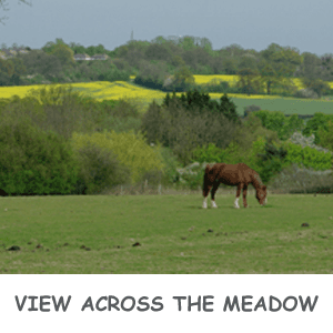 meadow with a horse