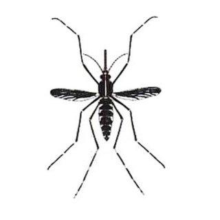 zanzara tigre