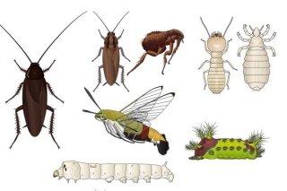 lotta insetti infestanti