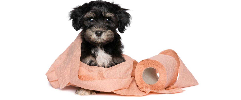 cane avvolto nella carta igienica