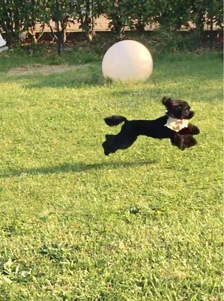 cane mentre corre in un campo