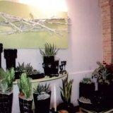commercio piante, fornitura piante