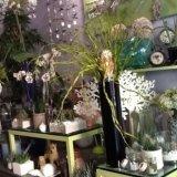 piante da appartamento, vasi da interno