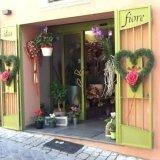 negozio piante verdi, piante da giardino