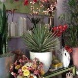 piante ornamentali, piante da appartamento, pante da interno