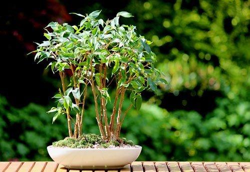 piante da interno, piante da appartamento, piante per interni