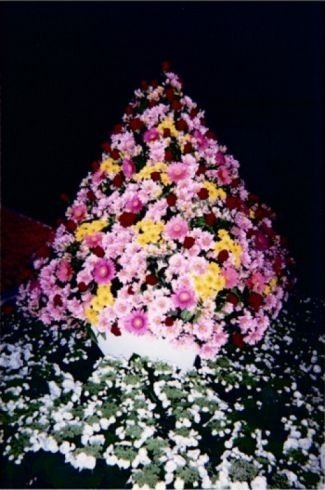 fiori per cerimonie, piante per cerimonie
