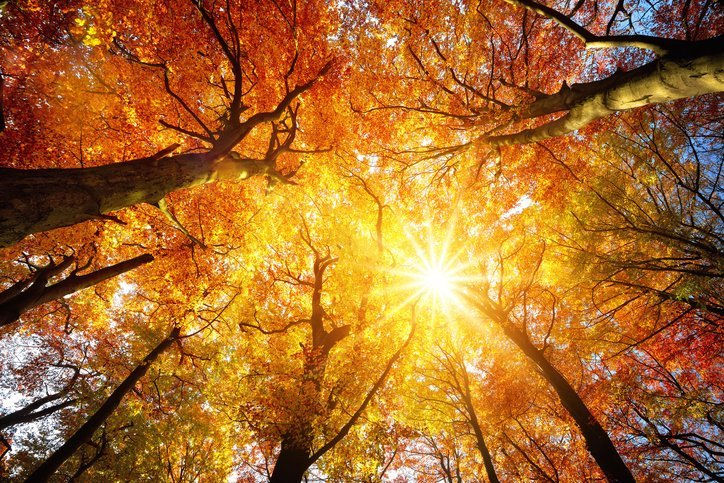 Autumn Trees Changing Color - Fall Pest Control - Killo Exterminating Co