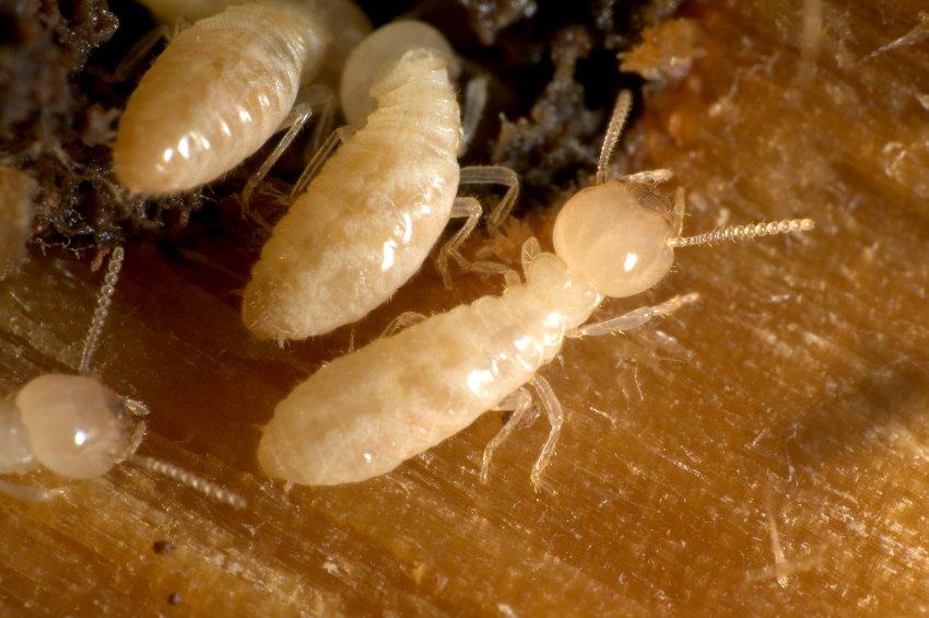 Termite Control Charlotte NC