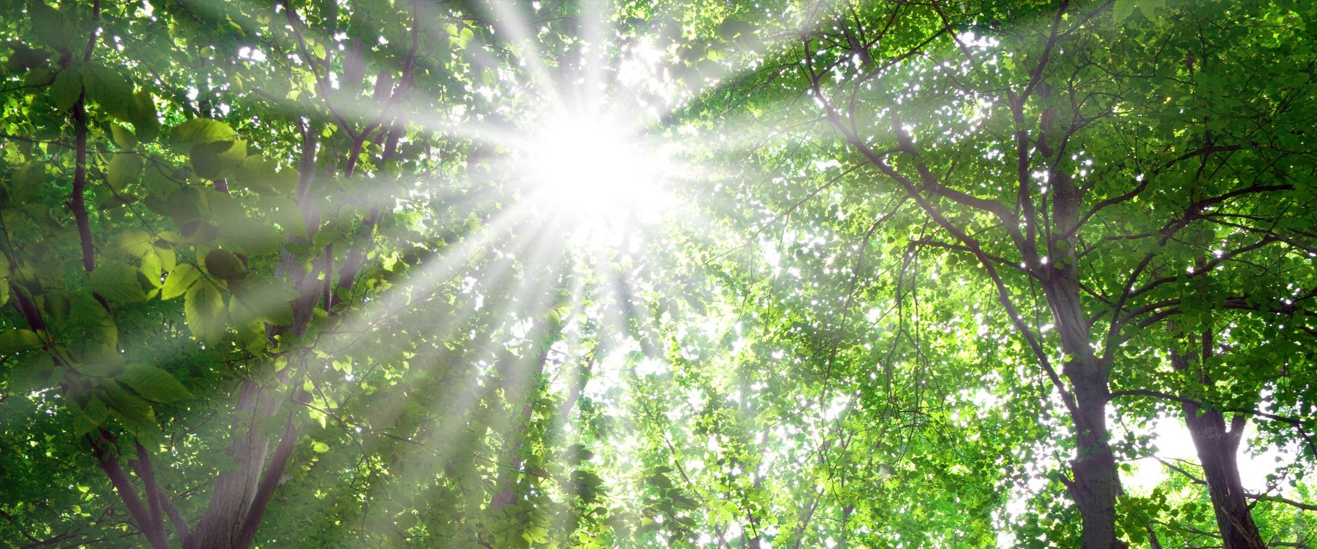 sunrays from the tree