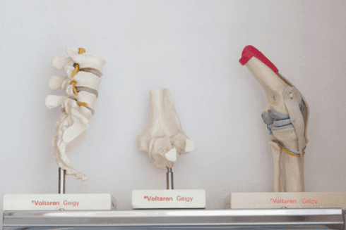 Ecco alcuni modelli delle articolazioni del corpo umano.