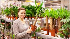 vendita piante da interni