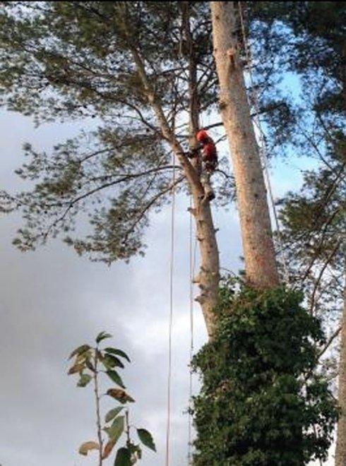 abbattimenti alberi controllati