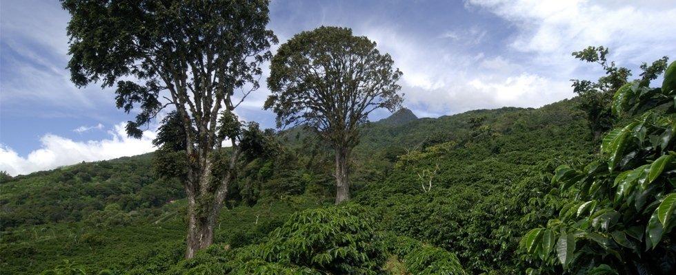Zone di coltivazione caffè