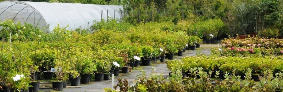 Plants for sale at our Wanganui garden nursery