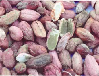 Aflatoxin infected peanuts