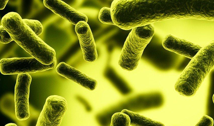 E. coli_gram negative bacteria