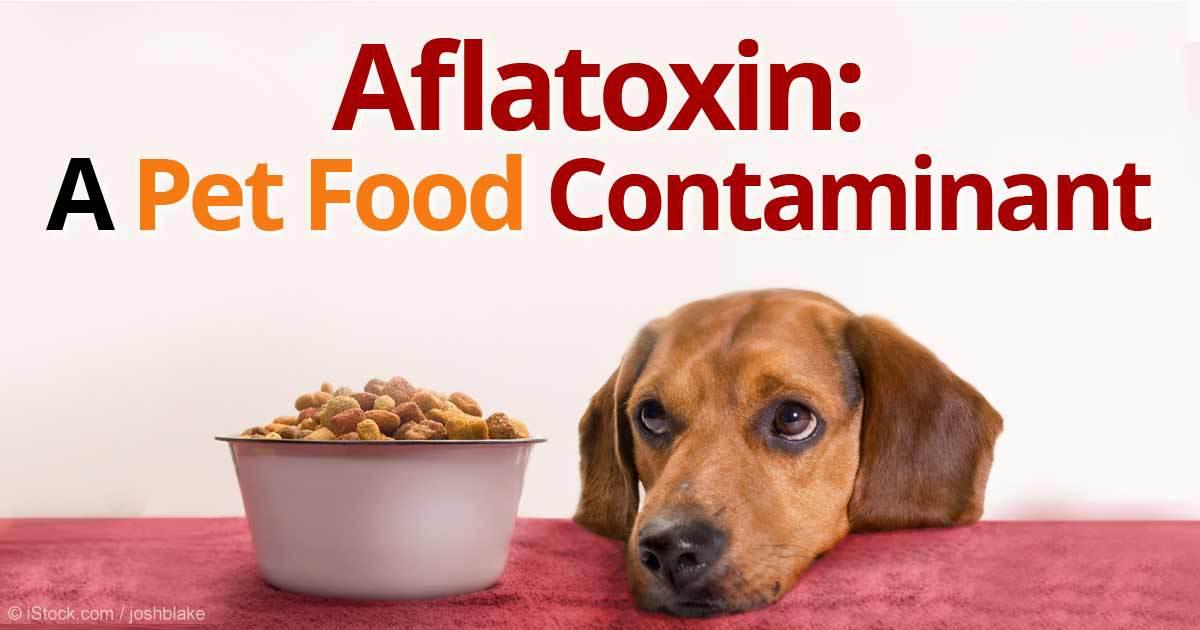 La aflatoxina en los alimentos para mascotas