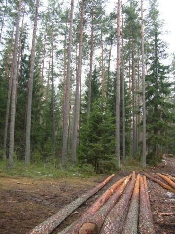 realizzazione Pali in pino in autoclave