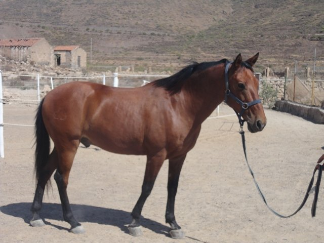 Horse Riding Adventures in Tenerife - Official Website - Horse Riding Adventures in Tenerife - Official Website