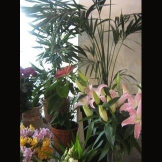 fiori singoli