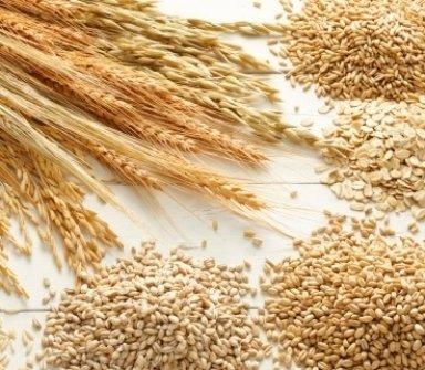 essicazione_cereali_conto_terzi