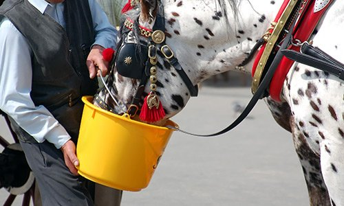 Cabman watering his horse
