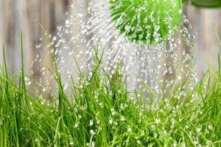antiparassitari piante