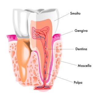 devitalizzazione denti, incapsulamento denti, cura carie profonde, Scandicci (FI), Firenze