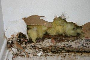 Gross, moldy baseboard