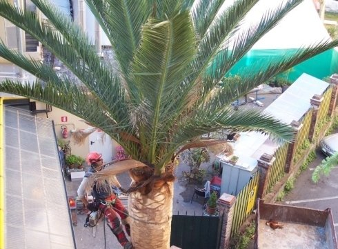 Tree climbing palma