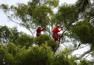 Lavori di tree climbing