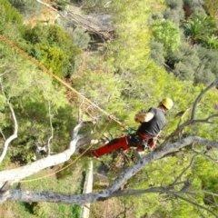 Lavori di giardinaggio in tree climbing