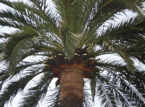 palma riviera ligure