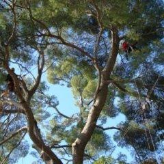 Lavori di potatura tree climbing