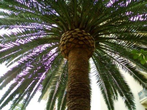 Tree climbing manutenzione palme