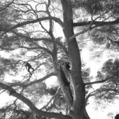 Servizi di giardinaggio in tree climbing